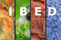 IBED logo